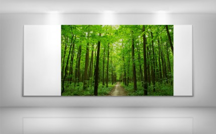 © series > LD ART gallery - NATURE Wood Path 2