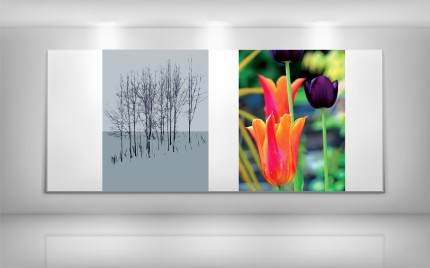 © series > LD ART gallery - NATURE Grey Winter Trees and Summer Tulips