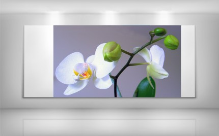 © series > LD ART gallery - NATURE Orchid Colour 1