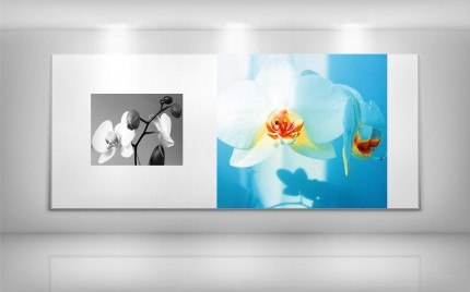 © series > LD ART gallery - NATURE Orchid B+W 1 and Abstract Color 1